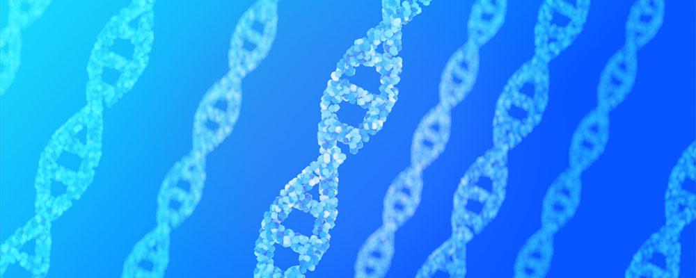遺伝と包茎の関係を示すDNA染色体の模型